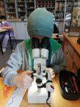 insektenbeobachtung2A01